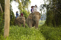 Hi_AGT_51945629_Riding_elephants_in_the_jungle.jpg